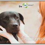 cuanto cuesta llevar a un perro al veterinario